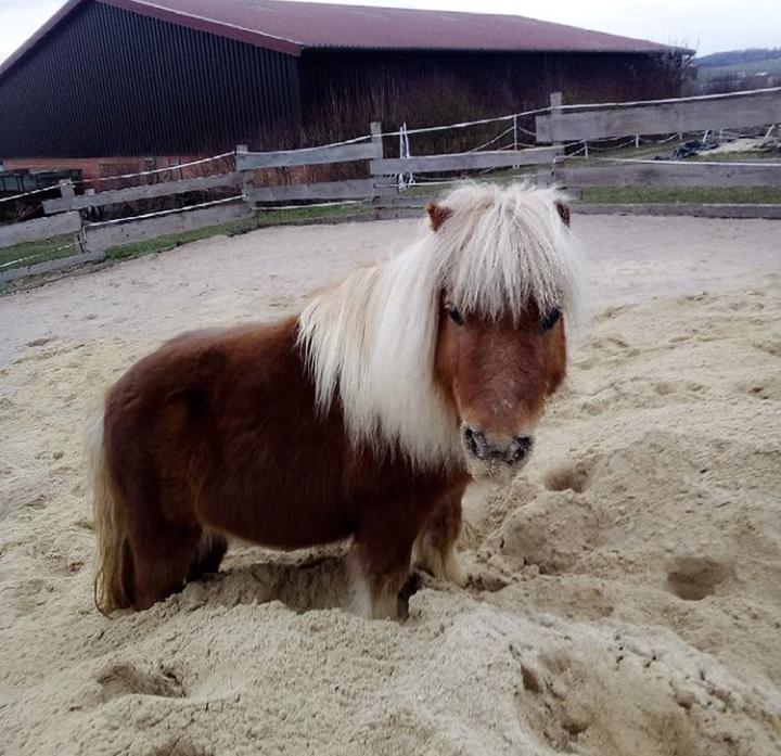 Pferdehaltung in Eigenregie